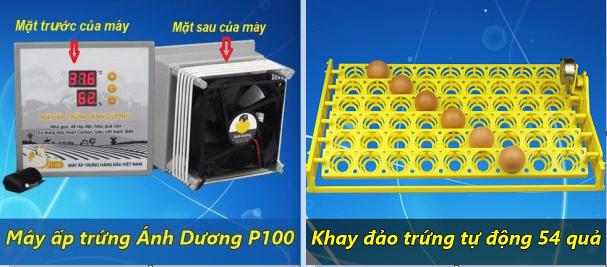 mua máy ấp trứng tại tphcm