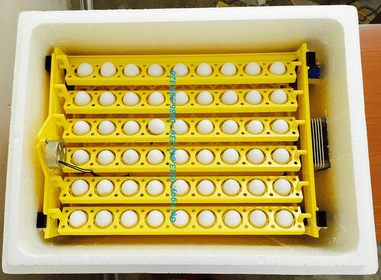 máy ấp trứng gà mini ánh dương