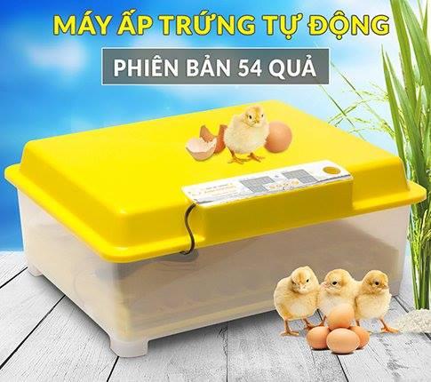 máy ấp trứng gà bao nhiêu ngày nở
