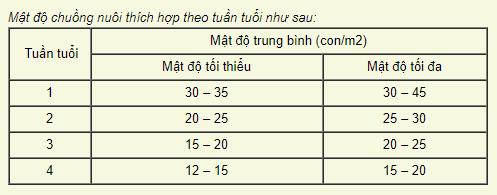 Cách nuôi gà con khỏe mạnh giai đoạn 1 -28 ngày tuổi