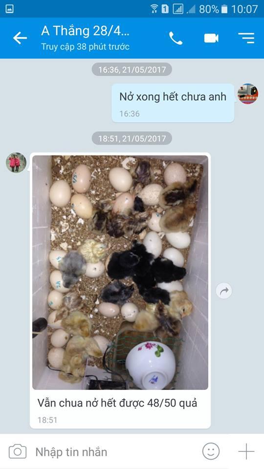 mua máy ấp trứng mini ở đâu tốt
