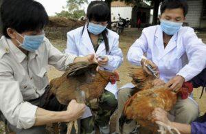 Hướng dẫn làm vaxcin phòng bệnh cho gà mái đẻ hiệu quả