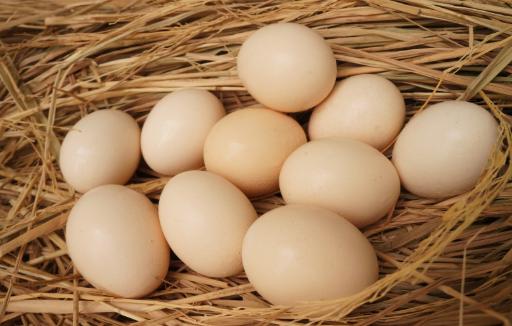 Cách chọn trứng gà chất lượng tốt trước khi ấp