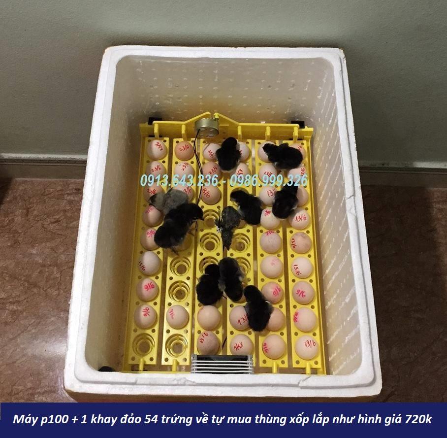 máy ấp trứng p100 1 khay đảo